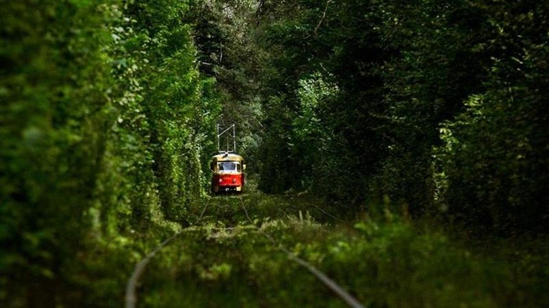 Поїздка на трамваї в Пущу-Водицю
