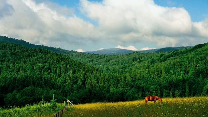 Леса Карпат